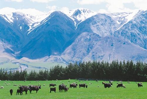 """<span class=""""fontBold"""">2017年末にニュージーランドの食肉大手を完全子会社化。欧州や米国、イスラム圏などに卸すルートを持つNZ社の商流をフル活用し、世界への事業展開の足掛かりとする狙いだ(写真はNZの牧場風景)</span>"""