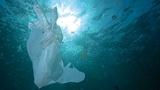 海水中の微生物が丸ごと分解