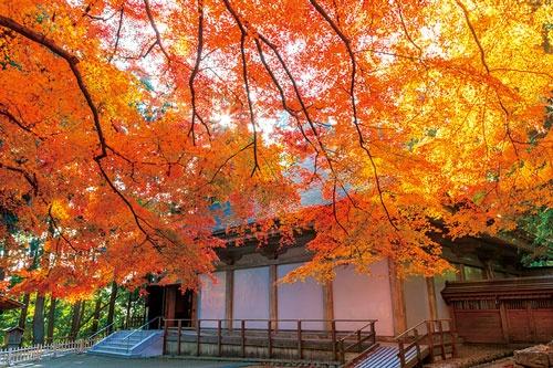 <b>岩手県の世界遺産、平泉の中尊寺。ヤマモミジなど見事な紅葉で多くの観光客を集める</b>(写真=アフロ)