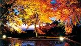 秋を満喫する 紅葉スポット