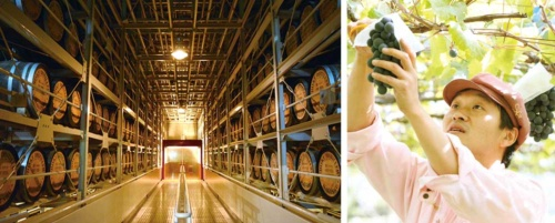 "<span class=""fontBold"">サントリーのウイスキー「白州」の貯蔵庫(左)と、メルシャンの国内ワイナリー向けのブドウ農場(右)</span>"