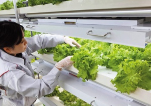 <b>野菜生産ユニットは照明器具や空調設備を内蔵し、水耕栽培で育てる</b>