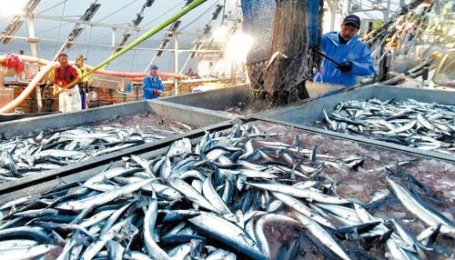 <b>低水準が続くサンマ漁。水産庁によると今年も過去最低を更新する見通し</b>(写真=読売新聞/アフロ)