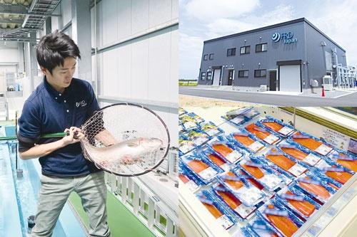"""<span class=""""fontBold"""">千葉県木更津市のFRDジャパンのプラントでは、水道水から作った人工海水をろ過し続けることで、水の入れ替えをしないで、トラウトサーモンを生産している</span>"""