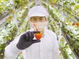 狙うは「植物工場のテスラ」。米国で高級イチゴ栽培に挑む