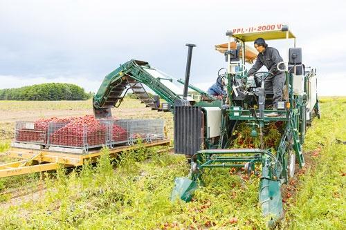 "<span class=""fontBold"">北海道で運営するトマト農園。グループ内でジュースの製造まで一貫して手掛ける</span>(写真=吉田 悟)"