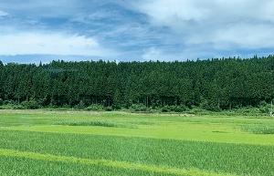 拠点を置く秋田の県南エリアは有数のコメ産地として知られる