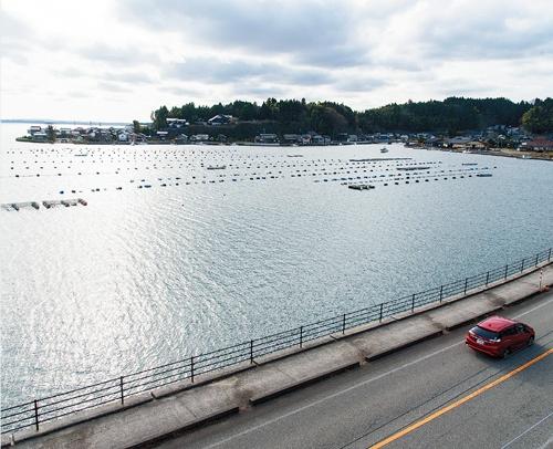 "<span class=""fontBold"">穴水町はカキの養殖がさかんで、七尾湾は日本海側有数のカキの産地</span>(写真=山岸 政仁)"