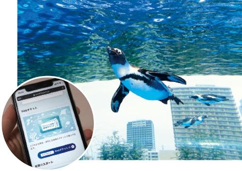 "<span class=""fontBold"">サンシャイン水族館はウェブ上で日時指定できるチケットの販売を始めた</span>"