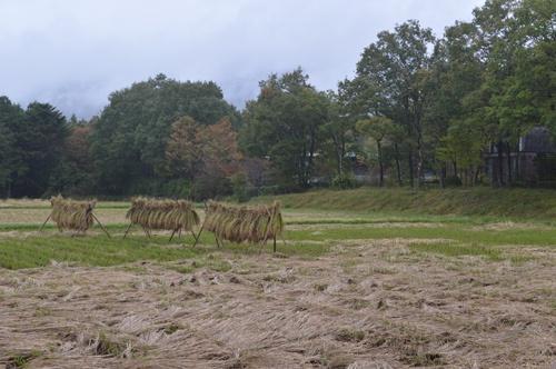 リゾナーレ那須から見た田んぼの風景は四季によってさまざまに移り変わる(写真=栗原克己)