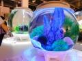 リース、個人向け…手軽な小型水族館ビジネスが続々
