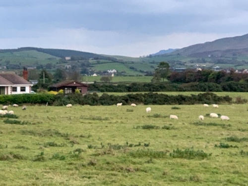 北アイルランドには広大な牧場が広がる