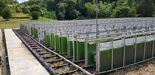 マレーシアのサラワク生物多様性センターに設置された1000平方メートル規模の藻の培養設備