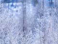 [予告]コロナ禍で「冬来たる」、商社に問われる人の力