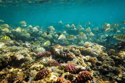サンゴ礁など豊かな自然を目的に、多くの観光客がモーリシャスを訪れている(写真:Shutterstock)