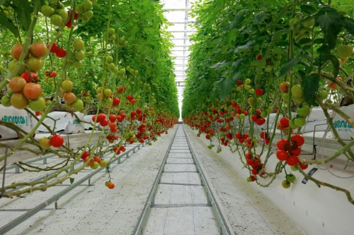 10年前、西郷村には大規模な植物工場を建設する計画があった(写真はイメージ、PIXTA)