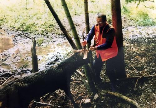 罠にかかった鹿を捕らえる緊張の一瞬(写真:古田洋隆氏提供)