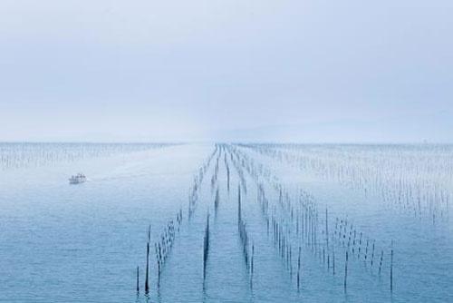 日本一の海苔生産地、九州有明海