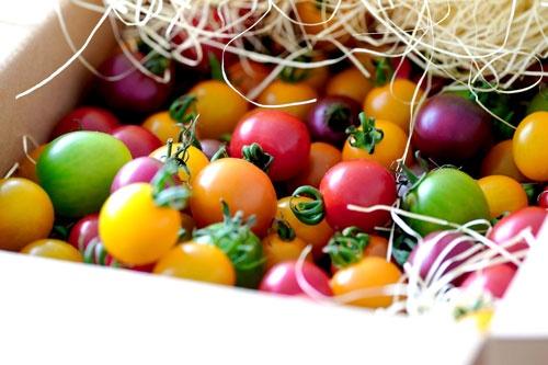 カラフルな彩りのミニトマト