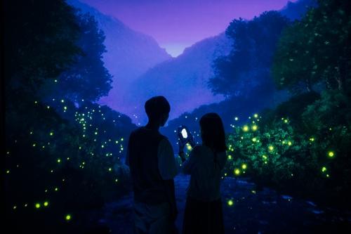 ゲンジボタルが光を放つ風景は幻想的だ