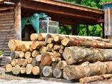 ウッドショックは日本の林業に追い風、逆転の発想で国産材を海外に