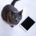 賢い投資家はなぜiPhoneを使わないのか