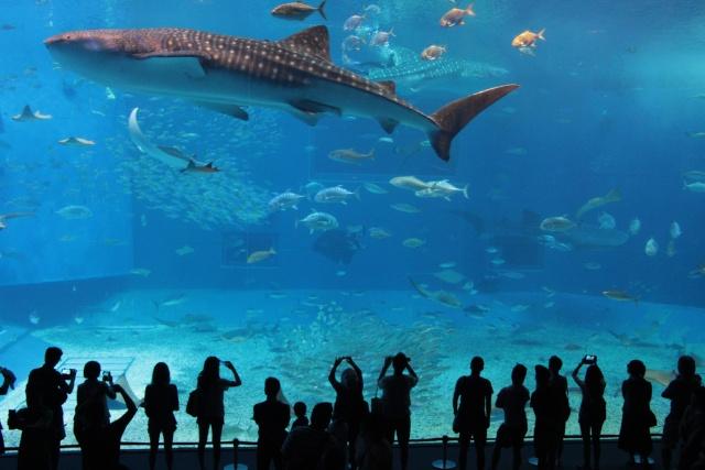 大水槽でジンベイザメが優雅に泳ぐさまを見られる沖縄美ら海水族館も、沖縄北部エリアに位置する(写真/Shutterstock)