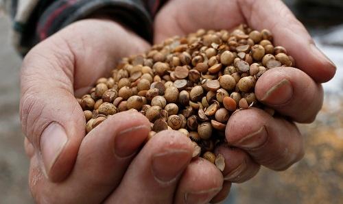 米中貿易戦争は米国の穀物業界にも不安をもたらしている。2018年4月5日撮影(写真:AP/アフロ)