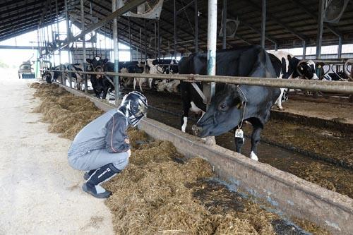 牛舎の中で牛と見つめ合うフェル。極寒期でも暖房は入れない。