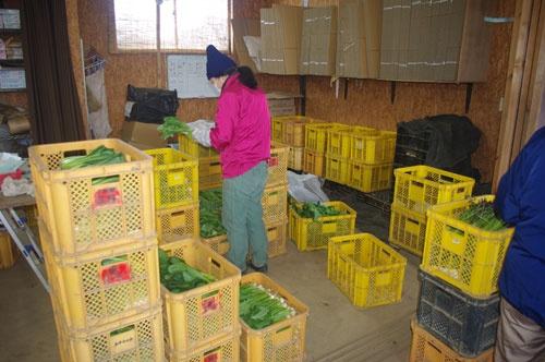 久松農園には個人客や、個人経営の飲食店からの注文が多い