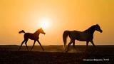 「馬」に始まり「骨董品」に終わる貿易のロマン