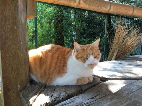 岩屋寺で出迎えてくれた猫