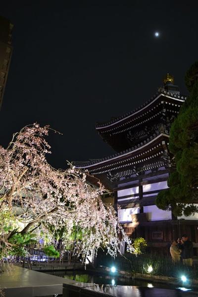 桜の六角堂 頂法寺(写真提供:六角堂 頂法寺)