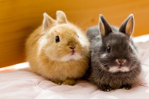 愛玩動物のウサギが金を生んだ(写真:PIXTA)