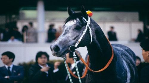 1988年、中央デビューしたオグリキャップは6連勝、有馬記念も制した(©︎JRA)
