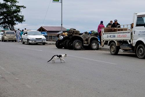 <b>リストヴャンカでは、今回の旅で唯一ネコを見かけた。そして、右手には日本語表記のままの日本の中古トラックが</b>