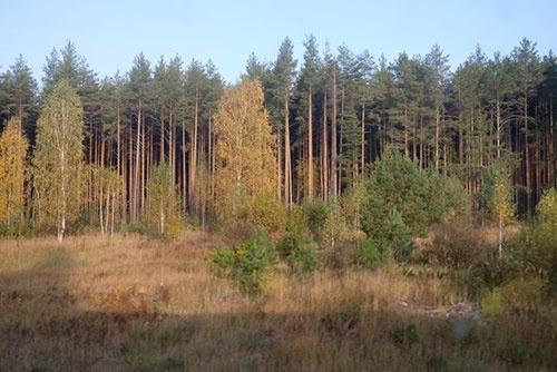 この付近に来て針葉樹林を多く見かけるようになった
