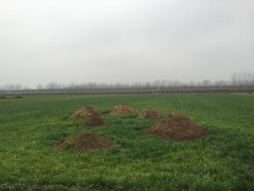 ゼンカイさんの自宅がある河南省の村。家族が亡くなると亡骸は家の畑に葬る(2015年、撮影=山田泰司)