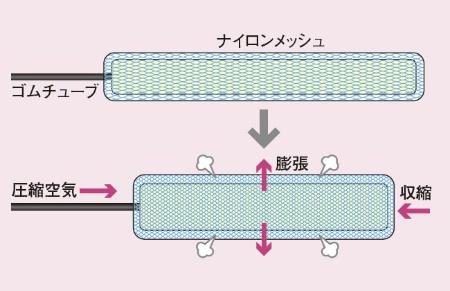 空気で動力を得る人工筋肉<br />●マッキベン型人工筋肉の仕組み
