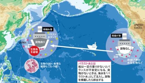 船舶移動に伴う生態系の乱れが深刻化<br />●バラスト水とともに生物類が遠隔地へ運ばれる
