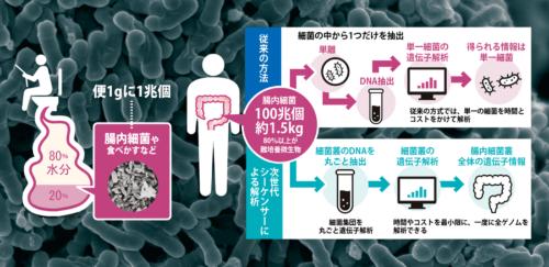便から分かる腸内細菌の研究が進む<br />●従来の解析手法と次世代シーケンサーによる解析の主な違い