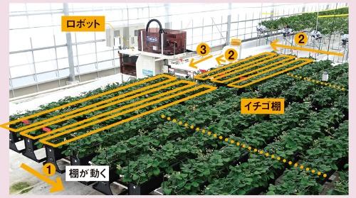 ロボットを固定し栽培棚を移動させ収穫する<br /> <span>●シブヤ精機のイチゴ収穫ロボットと「循環移動式栽培システム」</span>