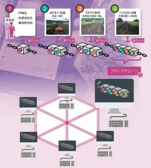 """<span class=""""pink2gyo""""> 情報のブロックをチェーンでつなげる</br>●農産物の生産履歴管理への応用イメージ</span>"""