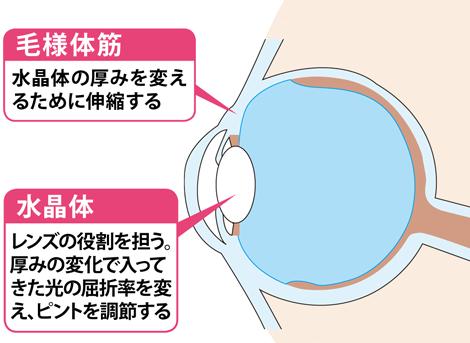 ●水晶体が柔軟に変形してピントを調節する