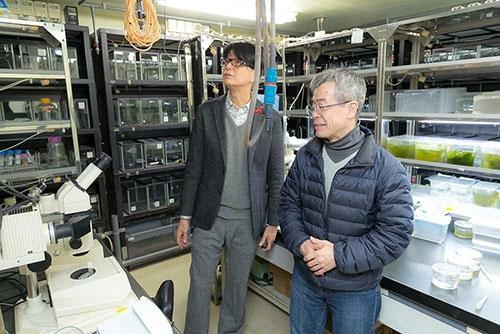 ゼブラフィッシュの飼育室。手前にある顕微鏡はDNA導入用。
