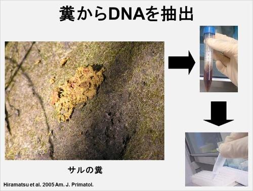 捕獲の必要や生体を傷つける恐れがないため、野生の哺乳類からDNAを採る場合、糞や毛を用いることが多い。(画像提供:河村正二)