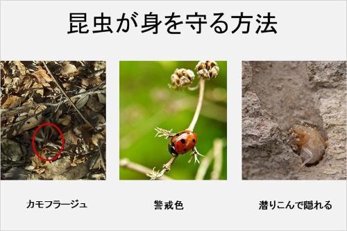 (画像提供:河村正二)