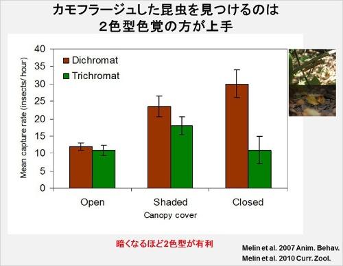 森の中でノドジロオマキザルが昆虫を1時間に何匹捕まえたか(捕獲率)を調べた結果。縦軸が捕獲率で、横軸が左から日向、日陰、森の中から空が見えない暗い状態。棒グラフペアの茶色(左)が2色型で、緑色(右)が3色型。(画像提供:河村正二)(Melin, A.D., Fedigan, L.M., Hiramatsu, C., Sendall, C.L., & Kawamura, S. (2007). Effects of colour vision phenotype on insect capture by a free-ranging population of white-faced capuchins (Cebus capucinus). Animal Behaviour, 73 (1), 205-214のFigure 2の改変)