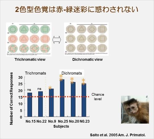 上左側が3色型での見え方、右側が2色型での見え方を表した図。下の棒グラフはサルでの実験結果で、左2本が3色型で右4本が2色型。(画像提供:河村正二)(Saito, A., Mikami, A., Kawamura, S., Ueno, Y., Hiramatsu, C., Widayati, K.A., Suryobroto, B., Teramoto, M., Mori, Y., Nagano, K., Fujita, K., Kuroshima, H., & Hasegawa, T. (2005). Advantage of dichromats over trichromats in discrimination of color-camouflaged stimuli in nonhuman primates. American Journal of Primatology, 67 (4), 425-436のFig. 1とFig. 3を改変)