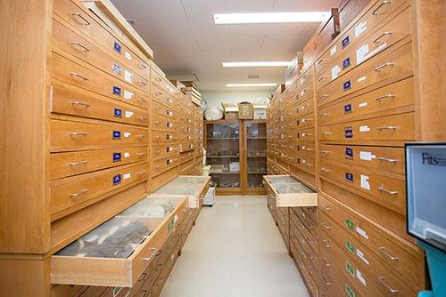 森林総合研究所の鳥の収蔵庫。